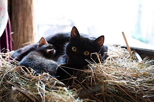 испанской коты фото на сеновале смущает специфический мускусный